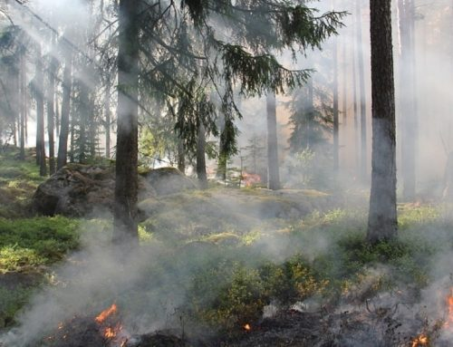 Deadly Forest Fire In Maine Yields Disappointing Settlement